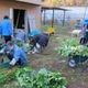 Machida City Helps Corporations Start Farming on Unused Land