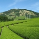 Three More Agricultural Sites in Japan Designated as GIAHS