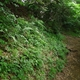 Historic Local Community Pathways in Japan Help Protect Green Spaces from Developers