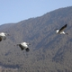 Conserving Black-Necked Cranes in Bhutan
