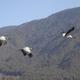 Conserving Black-Necked Cranes in Bhutan
