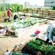 Allotment Gardens Sprout One after Another as Interest Grows in Urban Agriculture