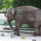 Elephants and Sweet Potatoes to Feed Osaka's Closed-Loop Project to Mitigate Heat Island Effects