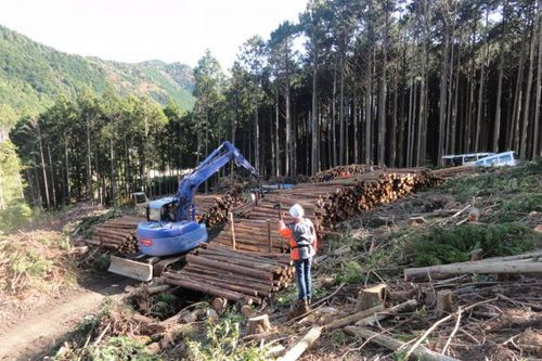 Photo: Japanese forest industry