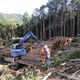 Japanese Institute to Develop Forest Management System called e-forest