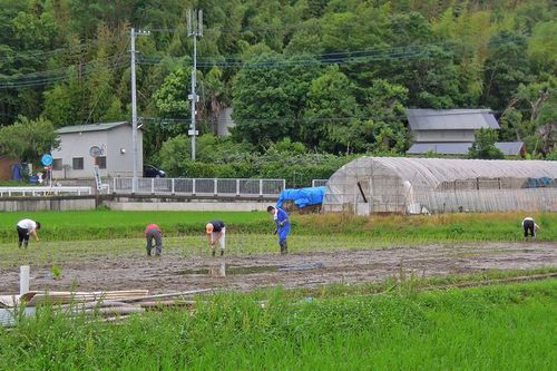 Photo: Rice planting landscape of Jige Furusato Village