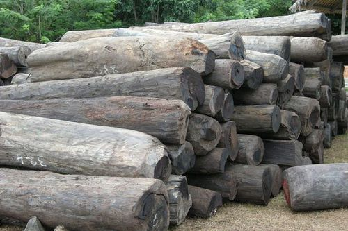 Photo: Illegal rosewood stockpiles