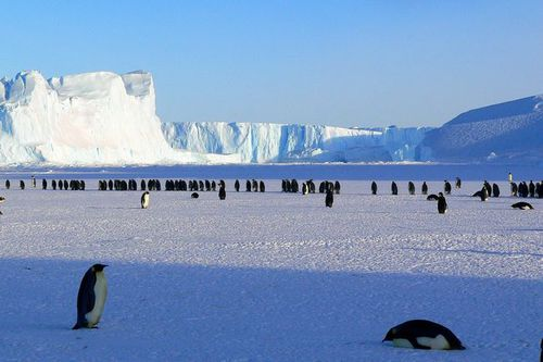 Photo: Penguins