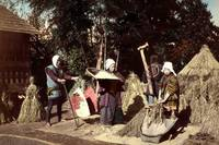 Biomass Energy Powered the Edo Period