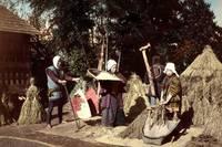 Biomass Energy Powered the Edo Period