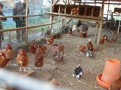 Photo: Frostpia-Farm