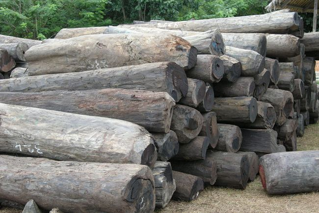 Illegal Logging Issues - Significance and Challenges: Pertinence of Forest Management Governance in Japan & Other Countries