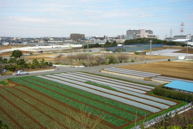 Greenery to Citizens! -- Urban Agriculture in Yokohama City, Kanagawa Prefecture