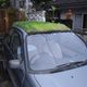 'Lawn on Wheels' - Cool Car Roof in Okinawa