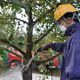 JA Shin Fukushima Verifies 80% Radioactivity Reduction in Fruit Tree Decontamination Experiment