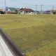 埼玉県初、コンビニエンスストアの屋上緑化を実施