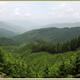サントリー、「天然水の森 ぎふ東白川」の水源涵養面積を拡大
