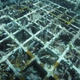 Japanese Research Institute Develops Coral Restoration Technology