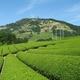 静岡・熊本・大分の農業が世界遺産に認定