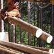 急拡大するバイオマス発電で進む森林資源の利用
