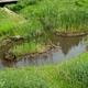篠山市、休耕田ビオトープや冬期湛水などに補助金を交付