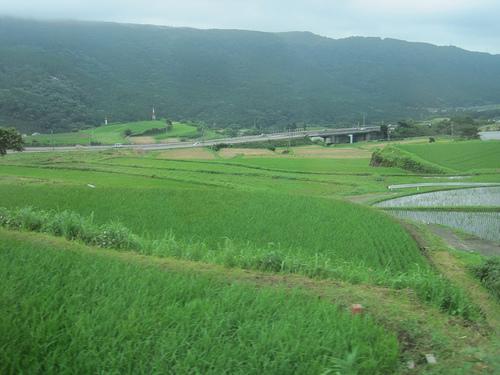 Terraced_rice_fields.jpg
