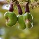 NEC 安定した供給性と高い植物成分率・耐久性をもつバイオプラスチック開発