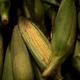 農林水産政策研究所 バイオ燃料政策が農産物の価格に及ぼす影響を分析