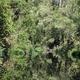 北海道大学ほか 熱帯泥炭地のCO2排出量を世界で初めて長期的に観測
