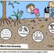 Micro-bio-diversity