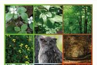 日本製紙、CSR報告書が「環境コミュニケーション大賞」優秀賞を受賞