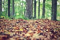 森林総研、土壌から放出されるCO2のマップを作成