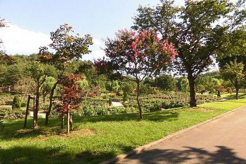 写真:川西ダリヤ園