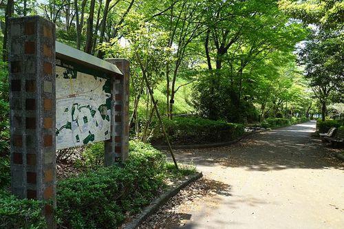 写真:多摩ニュータウンの遊歩道「松が谷散歩道」