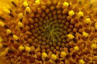 京都大学、生物多様性を維持する新しい理論を提示