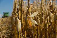 温暖化の進行で鈍化する穀物収量の伸び、適応技術の開発・普及が重要に