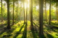 環境省、生物多様性に取り組む事業者のためのガイドラインを改定