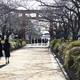 「武家の古都・鎌倉」の街並みを守れ