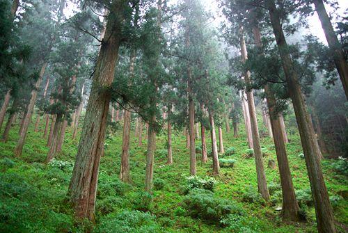 JFS/Banks_Protect_Forests