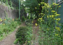 JFS/Love for Treasured Local Landscapes Creates New Bonds: A Look at Tokyo's Setagaya Ward