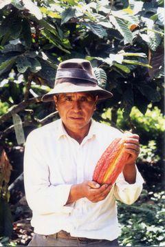 JFS/cacao producer