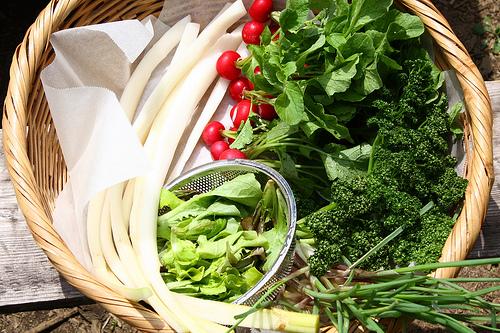 fresh_vegetables.jpg