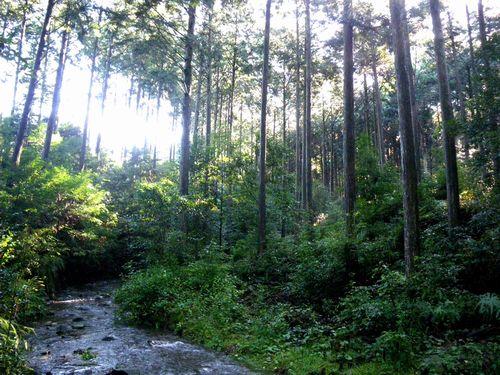 JFS/Hayami Forest