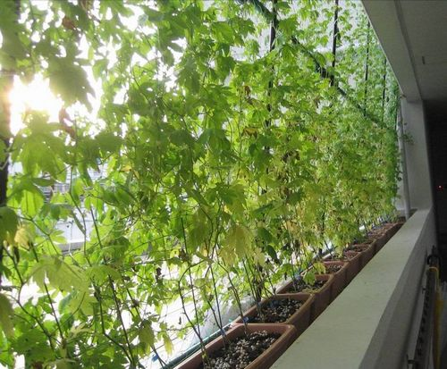 Manufacturer Saving Energy By Growing Vertical Gardens On