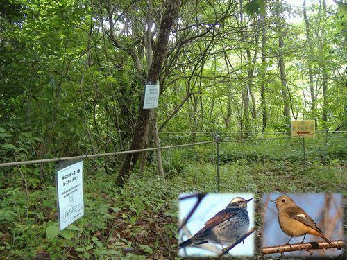 写真:横浜自然観察の森とツグミ、ジョウビタキ
