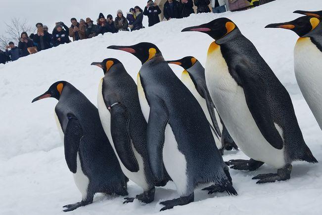「この時代における動物園の果たす役割とは?」―大人気の旭山動物園の坂東園長に聞く