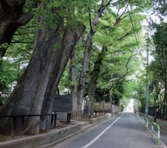 JFS/Love for Treasured Local Landscapes Creates New Bonds: A Look at Tokyo's Setagaya Ward