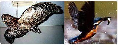 写真:風洞の中のフクロウとカワセミの写真